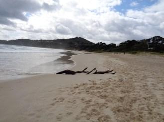 Byron Bay Main Beach (13)