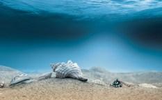 Shells-Seabed-1440x900