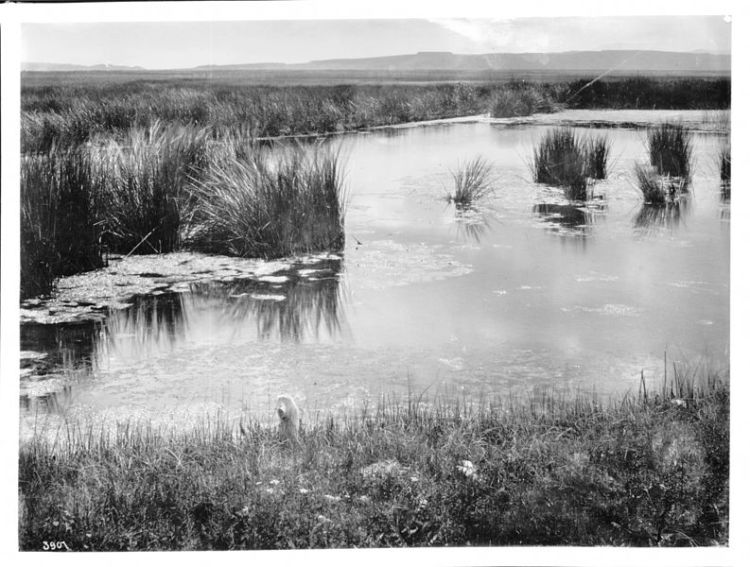 Photograph of a spring of water near San Rafael, New Mexico, ca.1898. via Wikimedia Commons