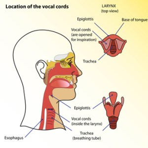 VoiceOverXtra  Sounds Odd #6  Bio Gel  Damaged Vocal