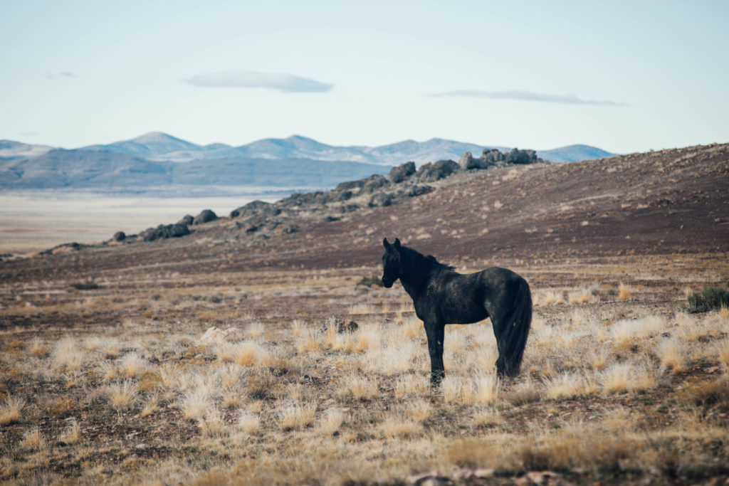 Image result for horses in the distance