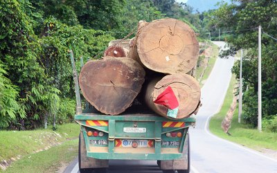 The Fight for Kelantan's Forests