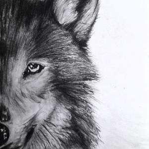 Chrispicture Stud'Art – Loup