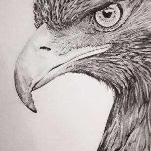 Chrispicture Stud'Art – Aigle Royal