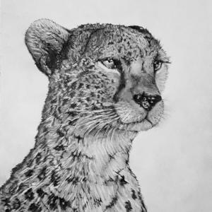 Chrispicture Stud'Art – Guépard