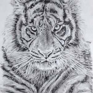 Chrispicture Stud'Art – Tigre