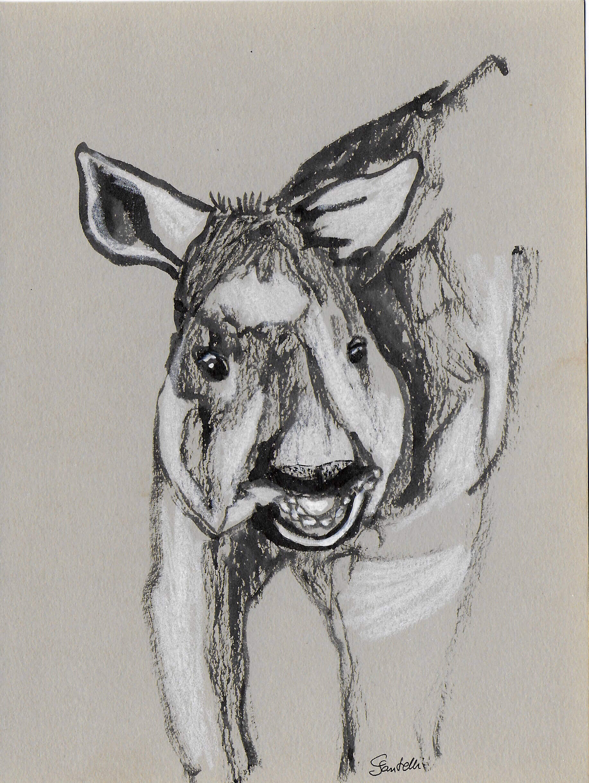 Claudine Santelli-tapir