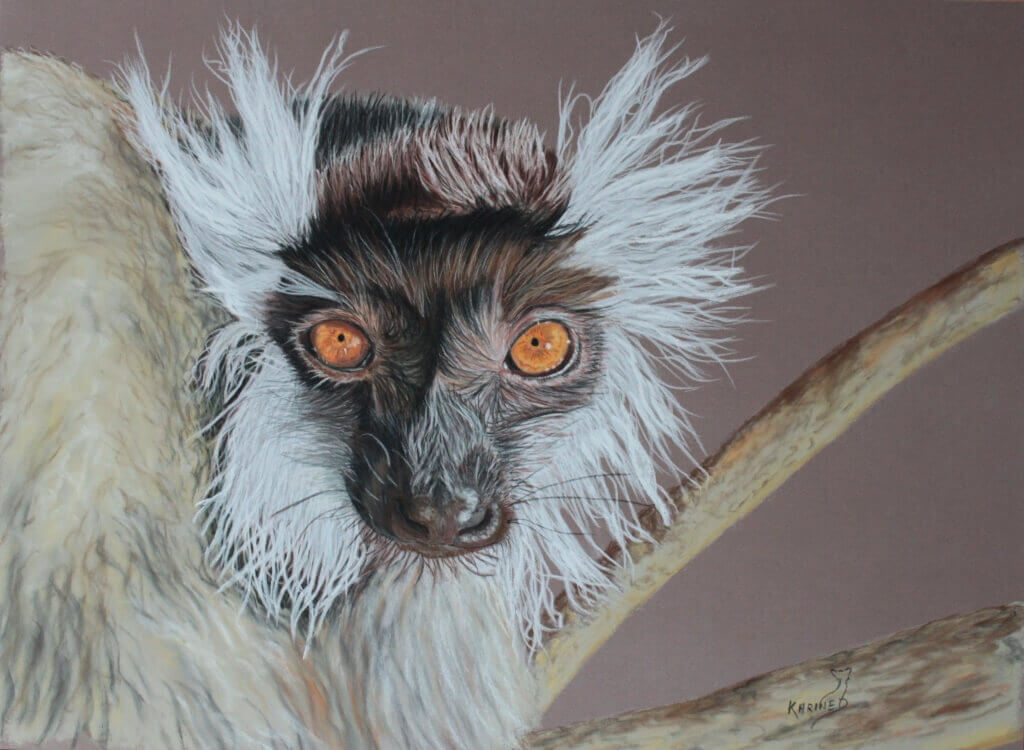 Karine D.-« Marie » lémur noir