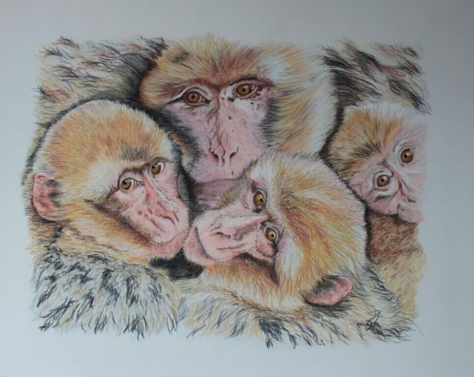 Karine D.-Macaques