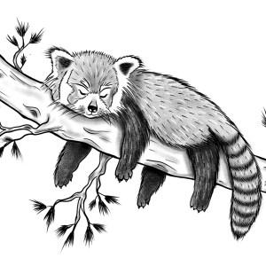 Gallïane – Panda Roux – Print A5