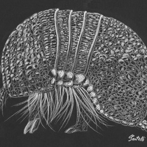 Claudine Santelli – Tatou – Print A5