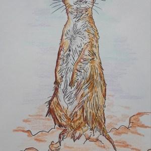 Véronique Redon – Le suricate