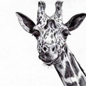 Céline Barrier – Girafe – Print A5