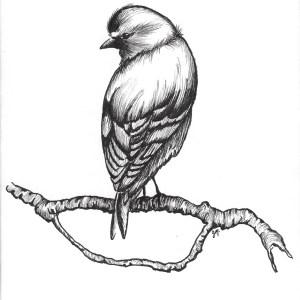 Gallïane Murmures – Comme un oiseau sur la branche
