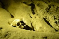 Human skull in the A.T.M. Cave in Belize.