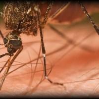 Malaria - Praktyczne porady