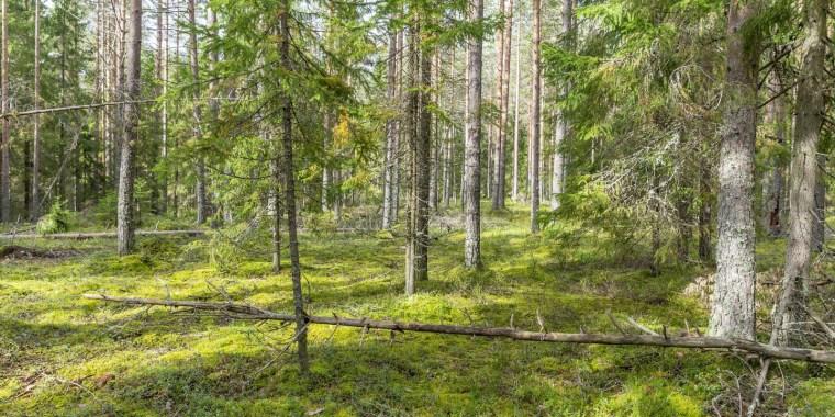 Охраняемые природные территории под надзором дирекции