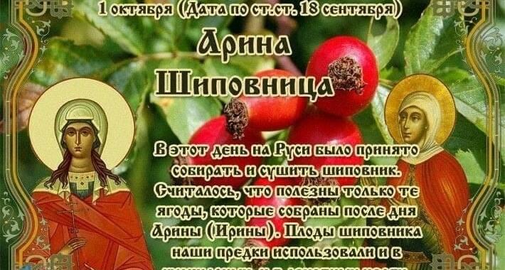 Арина Шиповница