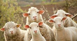 Novi slučaj Kju groznice na farmi u Danilovgradu