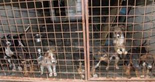 Učenici danilovgradske Gimnazije organizuju akciju pomoći napuštenim psima