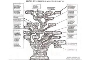 Porijeklo Radonjića iz Bjelopavlića