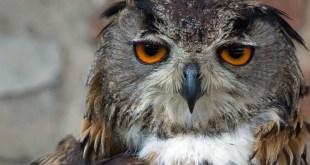 Saveljić: Dolina Rijeke Zete je jedna od najatraktivnijih staništa za ptice u Crnoj Gori
