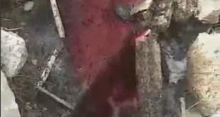 Velike količine krvi izlivaju se u Zetu
