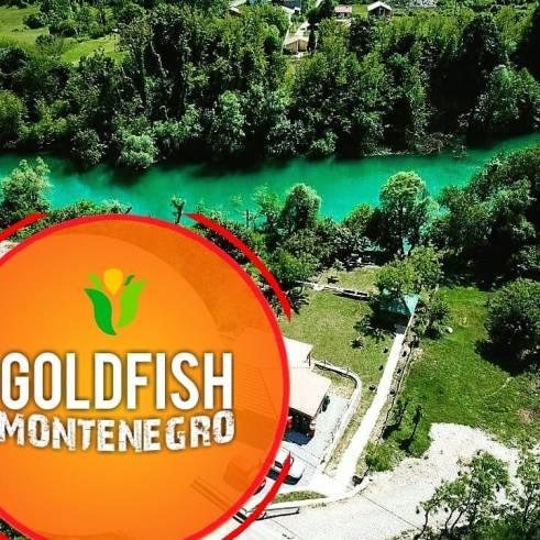 goldfishmontenegro_20200519_1