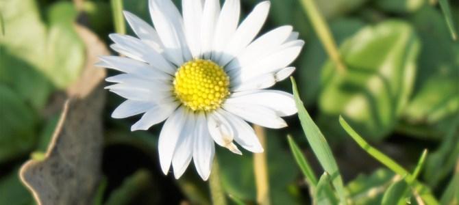 """""""Onkruiden zijn ook bloemen wanneer je ze beter leert kennen."""""""