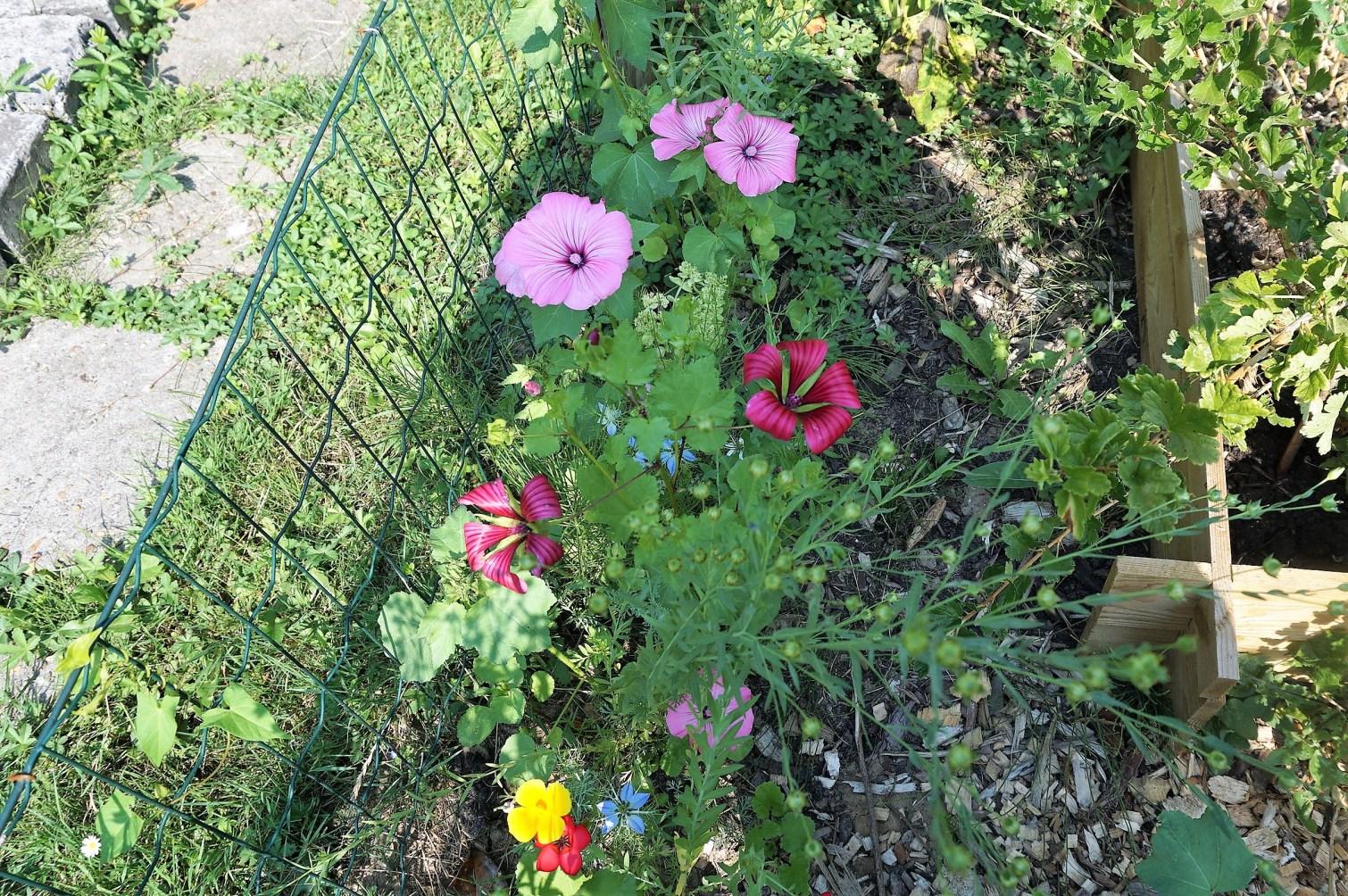bijenlokkende bloemen