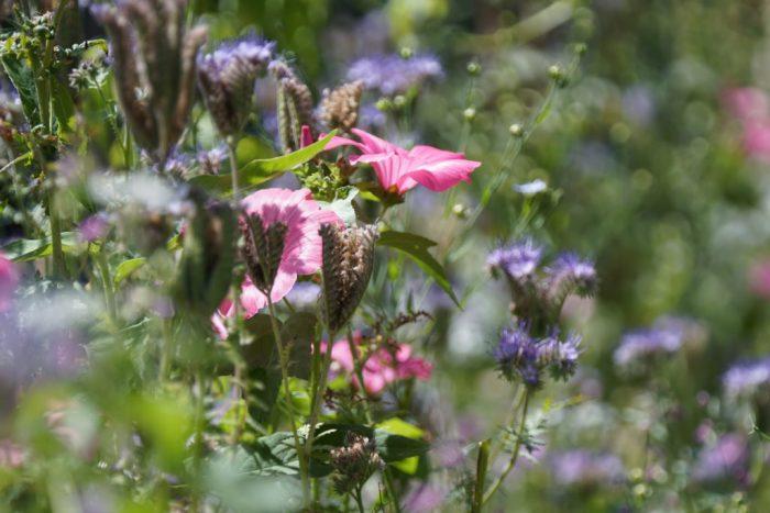 vlinderlokkende bloemenmix