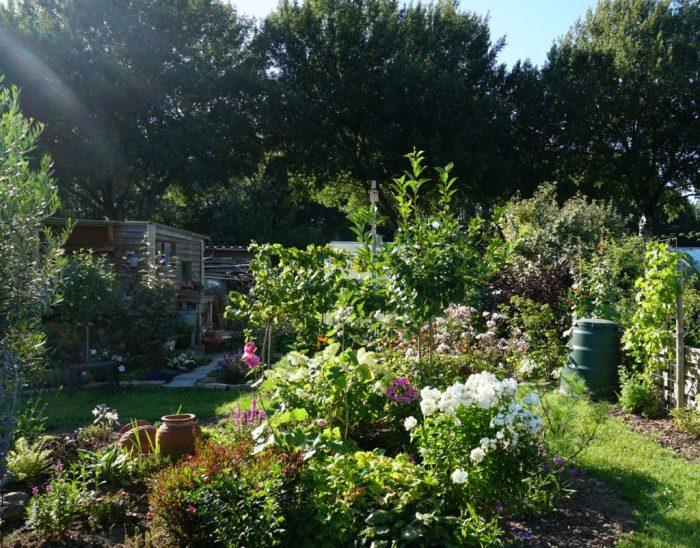 stukje tuin in de ondergaande zon