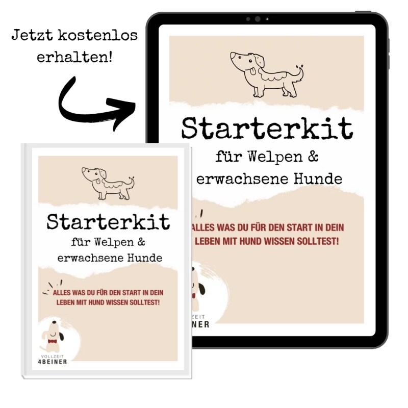 freebie-starterkit-welpen-hunde-hundeschule-training