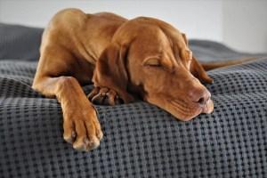 entspanntes-alleine-bleiben-berufstaetig-hund-karriere-hundetrainer-hundeschule