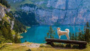 auslastung-hund-zu-viel-tipps-vollzeit4beiner-blog