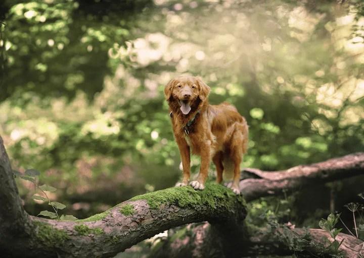Ideen-fuer-Spaziergang-mit-Hund