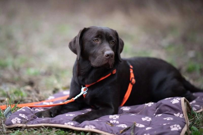 entspannter-alltag-ruhe-uebungen-hundetraining-tipps-anleitung