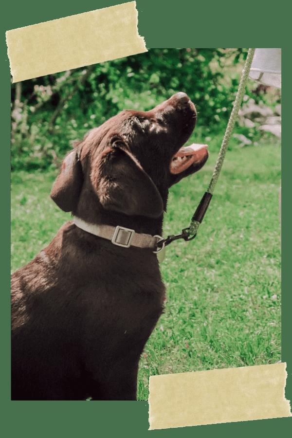 hundetraining-hundeschule-online-weltweit-welpe-vollzeit4beiner-kerstin-quast