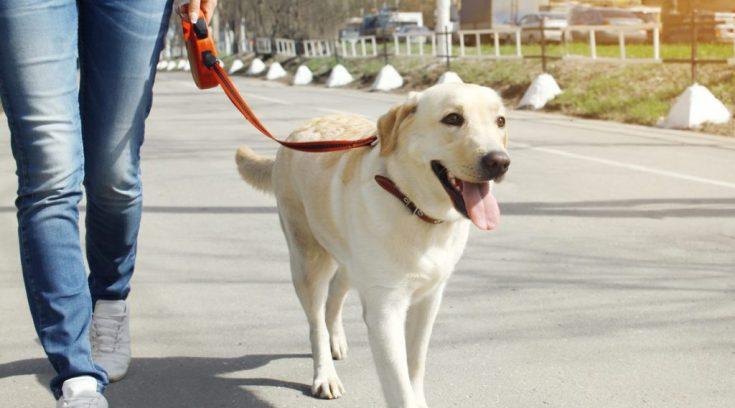 Dog Walk και φέτος στη παραλία του Βόλου!