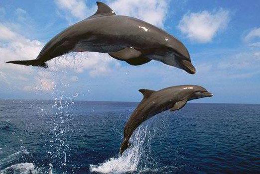 Mαγικό: Βγήκαν τα δελφίνια στον Παγασητικό! (Video)