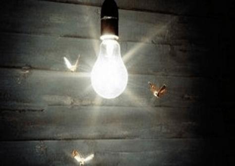 Bugs around bulb