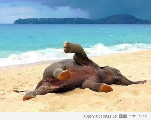 Elefant content 16