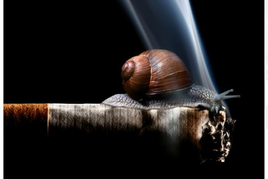 Cargol i tabac