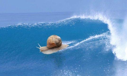 Cargol fent SURF.jpg1