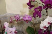 Girona - Temps de Flors 2014 v1-imp