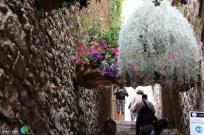Girona - Temps de Flors 2014 zzc1-imp