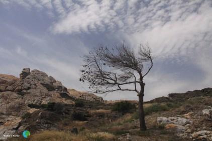 Paratge de Tudela - Cap de Creus l1-imp