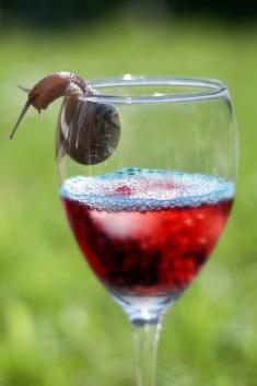 snail-wine