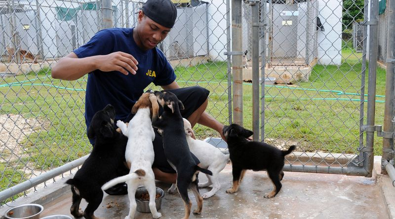 Volunteer with the Kauai Humane Society