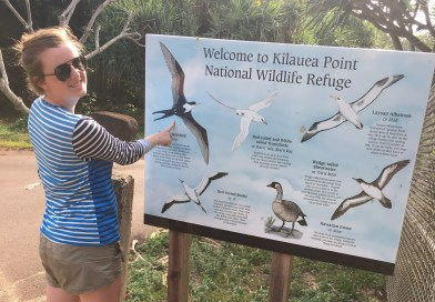 Christmas Bird Count with the Kilauea Point National Wildlife Refuge